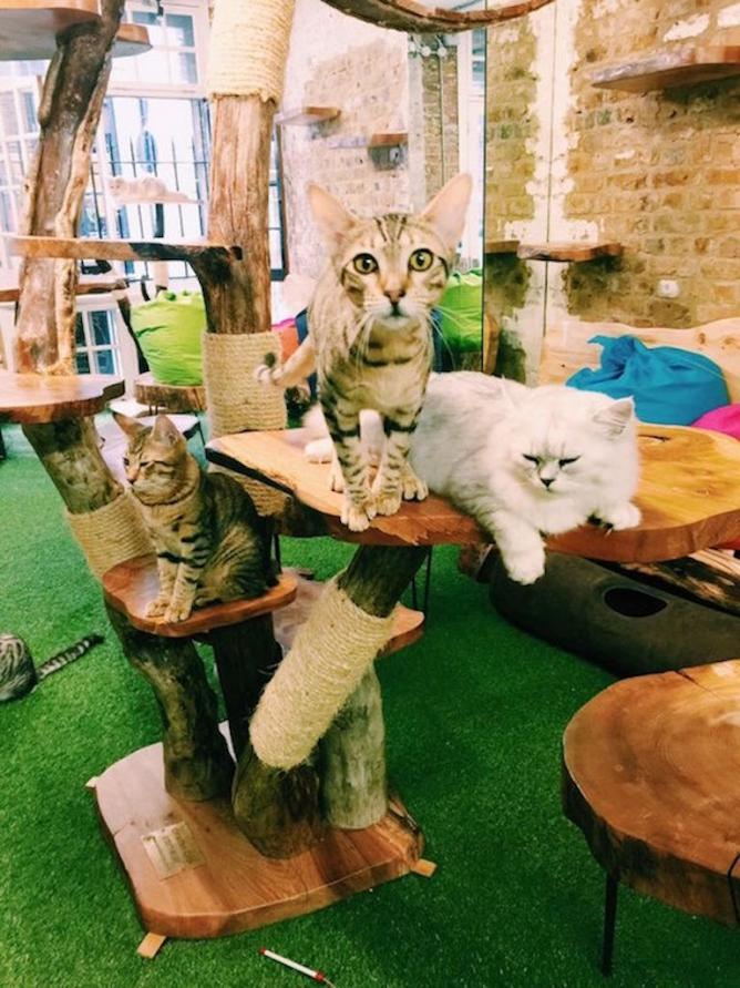 Making Pawsitive Changes The Best Cat Cafs in the UK