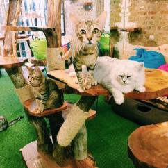 Cafe Themed Kitchen Decor Cabinets Naples Making Paw-sitive Changes: The Best Cat Cafés In Uk