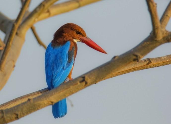 Bird in Mysore India