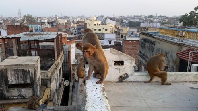 Varanasi principais cidades da India