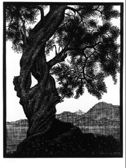 Escher etching, Old Olive Tree, Corsica | © austinaronoff / WikiCommons