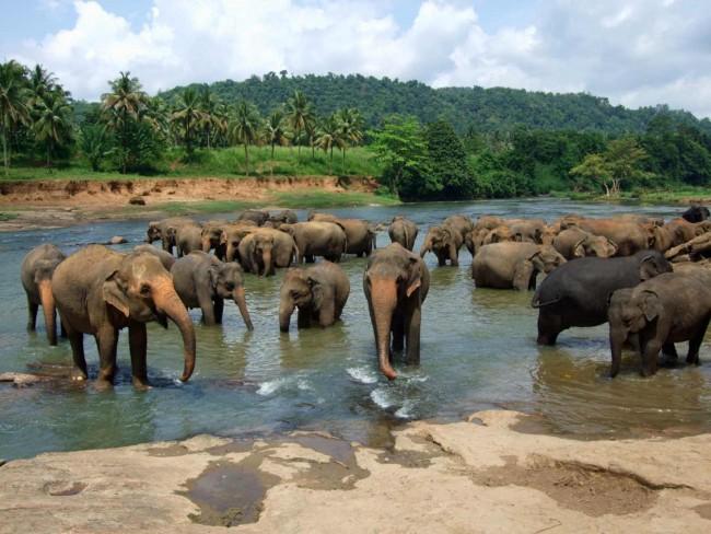 Nachural Wallpaper Full Hd The 12 Most Beautiful Spots In Sri Lanka