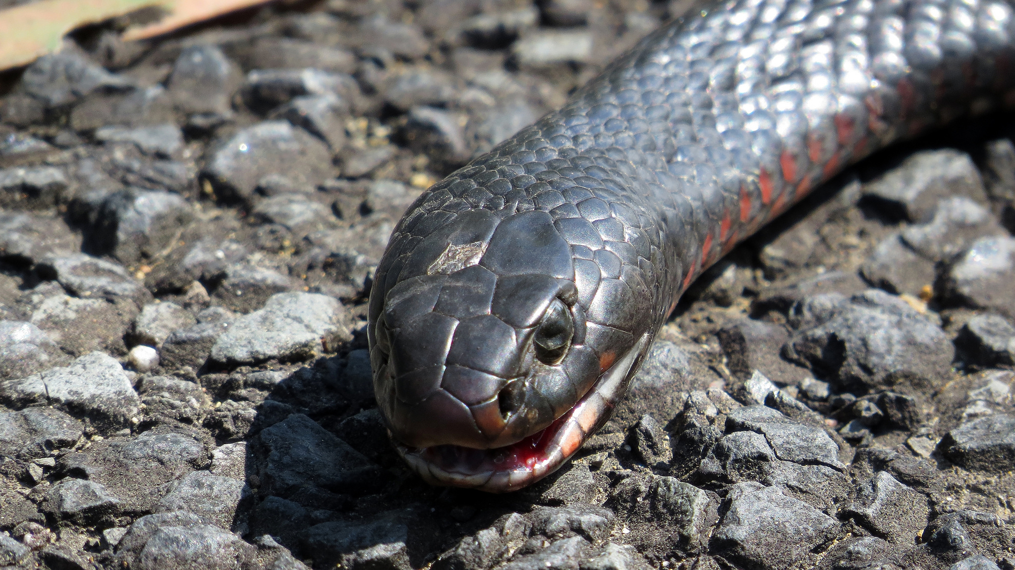 7 Things You Didn T Know About Australian Snakes And How To Handle Them