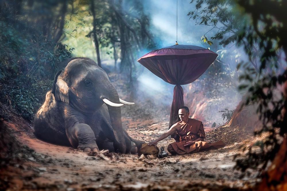 Buddhist Animal Release Basic Fang Sheng Facts You Should