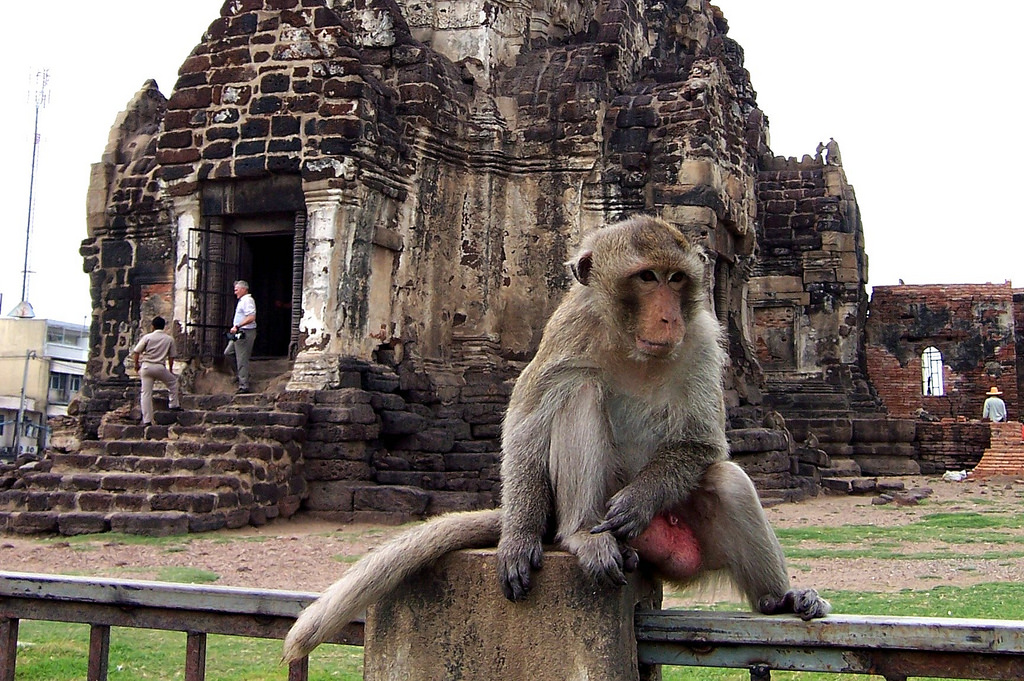 Everything You Need To Know About The Lopburi Monkey Festival
