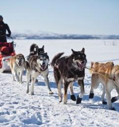 dog sled clipart [ 1280 x 853 Pixel ]