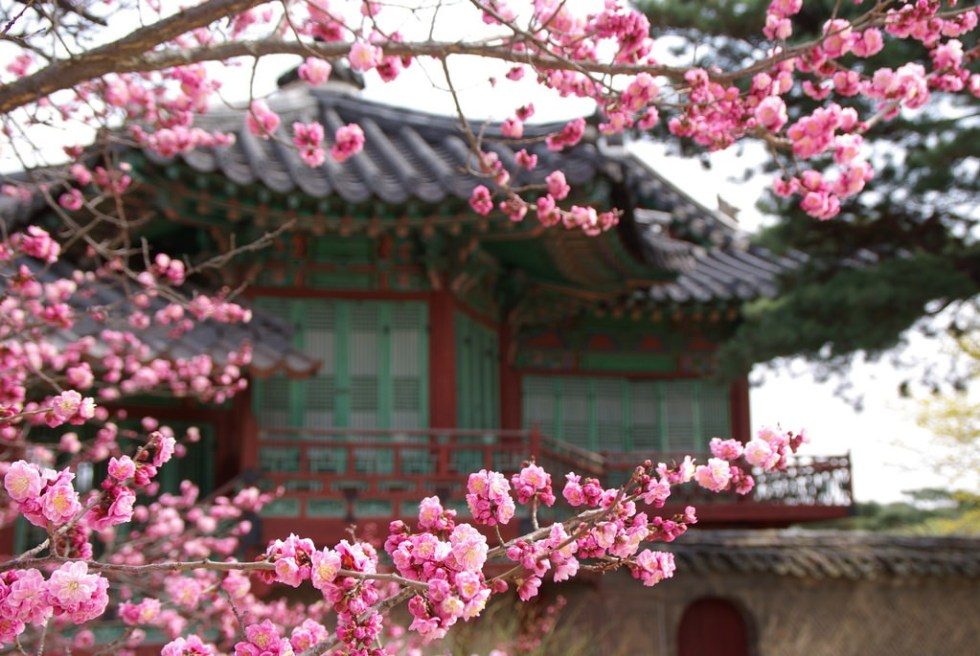 Secret Garden: The Most Amazing Places To See Cherry Blossoms In Korea