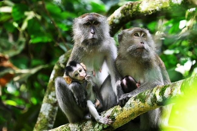 11 Amazing Animals You Can See In Taman Negara Malaysia