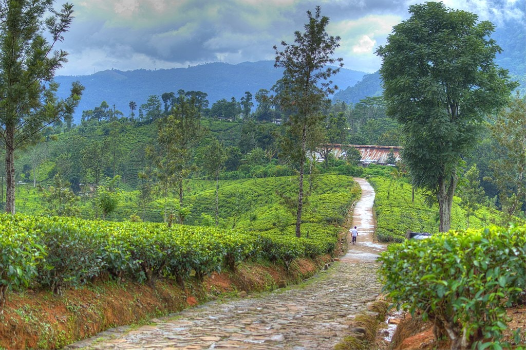 The Top 11 Things To See And Do In Nuwara Eliya Sri Lanka
