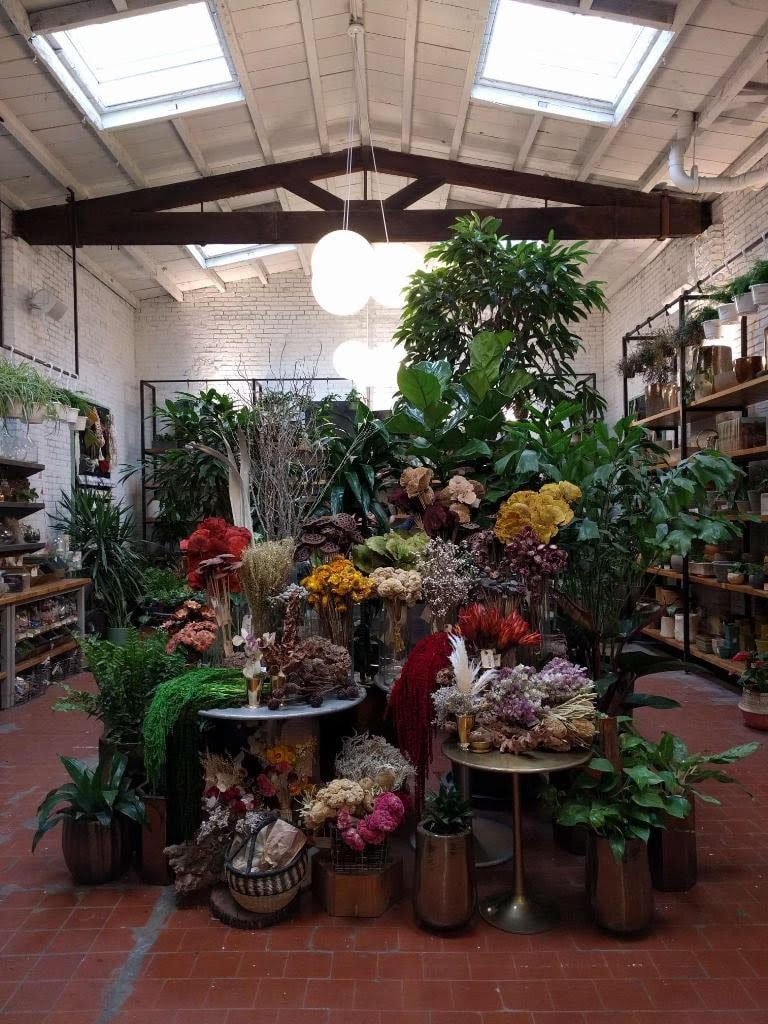 Where To Buy Chic Indoor Plants And Trees In Brooklyn