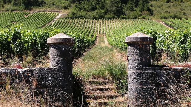 vineyard-374373_1920
