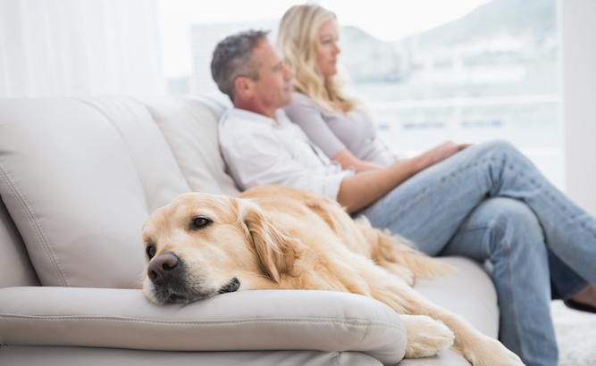 Dog realises entire life built around couple
