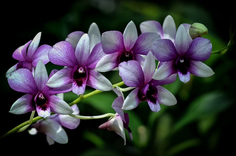 Top 10 Most Beautiful Flowers In The World  The