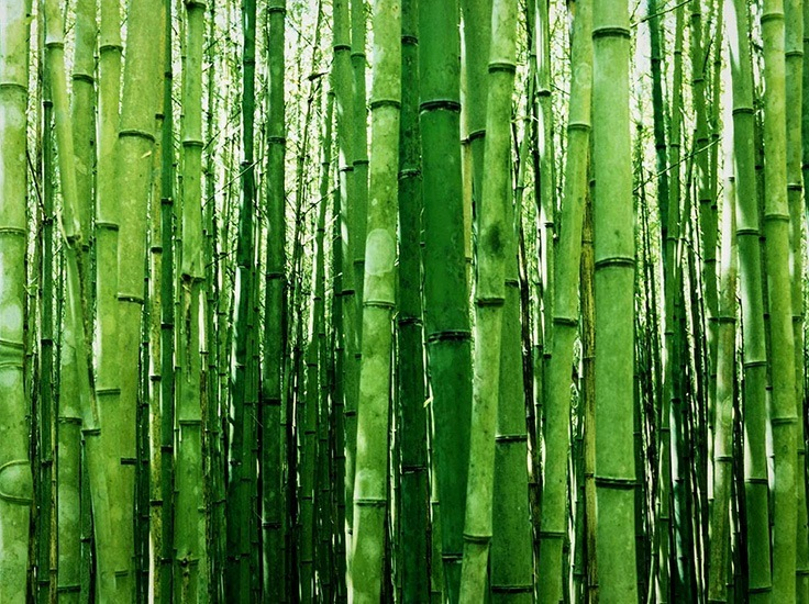 multiplex bamboo for sale