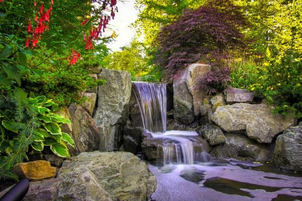 7 top plants japanese gardens