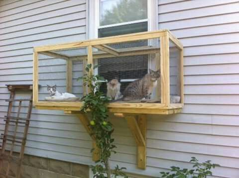 screened cat porches the best ideas