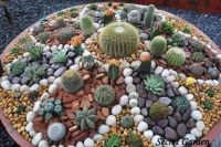 Painted Cactus Rock Garden Easy Video Instructions