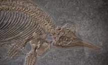 Fossil Revolution Shows Evolution Of Big