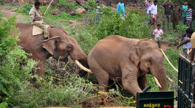 Wild elephant kills senior forest officer in India