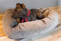 The Best Dog Beds: Reviews by Wirecutter | A New York ...