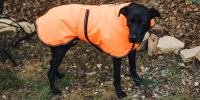 The Best Winter Jackets and Raincoats for Dogs: Reviews by ...