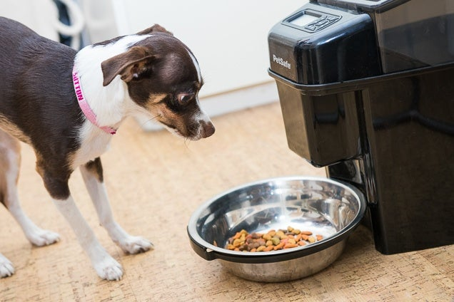 The Best Automatic Feeder For Cats And Small Dogs For 2018
