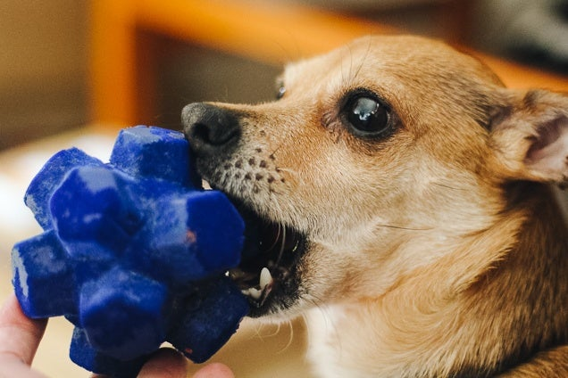 The Best Dog Toys According To Our Pups Reviews By Wirecutter