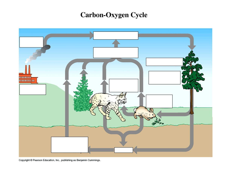 the rock cycle diagram fill in blank pj dump trailer pump wiring carbon