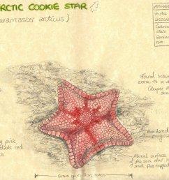 sea star aboral diagram [ 1240 x 877 Pixel ]