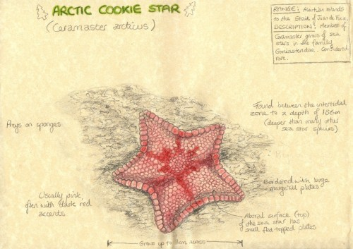 small resolution of sea star aboral diagram