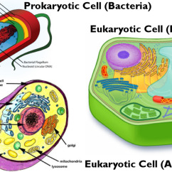 Plant Animal Cell Venn Diagram 86 Chevy Silverado Wiring H. Darius, 6th Prokaryotic V.s. Eukaryotic Cells