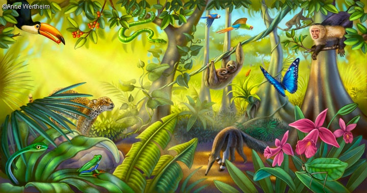 Jungle Wallpaper With Animals What Type Of Animals Live In The Rainforest And How Do Th
