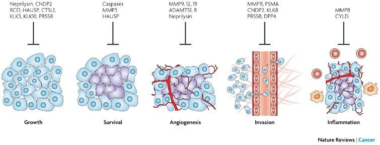 Cancer Progression
