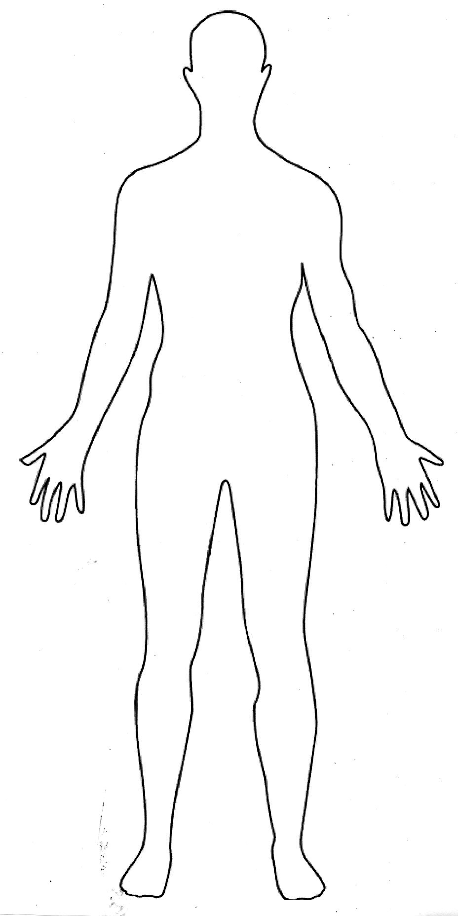 woman of upper torso diagram