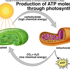 Photosynthesis And Cellular Respiration Cycle Diagram Universal Turn Signal Switch Wiring Cell Are Complementary Pro