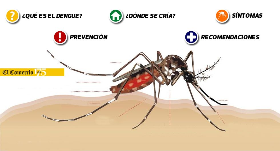Dengue: todo lo que tienes que saber para prevenirlo