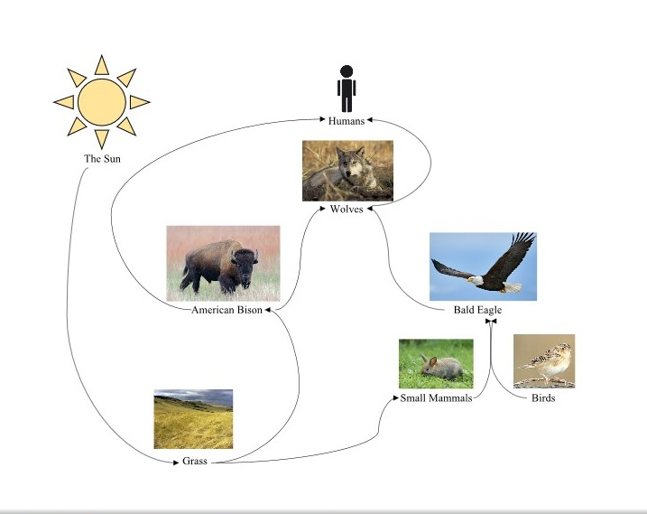 Temperate Grassland Food Web