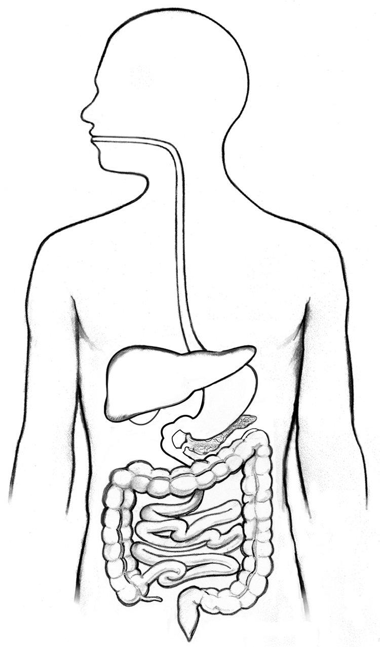 Digestive System_Alex