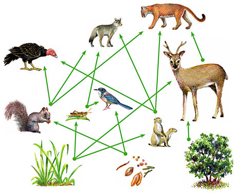 deciduous forest food web diagram iveco daily wiring english