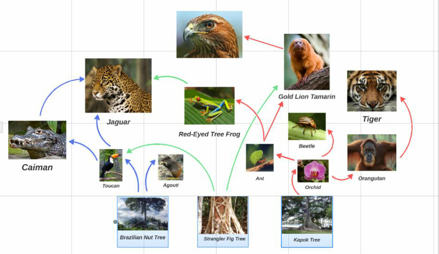lion life cycle diagram av cable wiring tropical rainforest food web