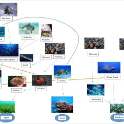 Coral Reef Food Chain Diagram Jeep Radio Wiring Bottlenose Dolphin Web