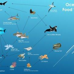 Simple Food Chain Diagram 03 Ford F150 Radio Wiring Ocean Web By Cristian Diaz