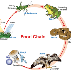 Venn Diagram Of Reptiles And Amphibians Goat Intestines Decomposers