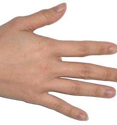 hair nail diagram skin  [ 1000 x 854 Pixel ]