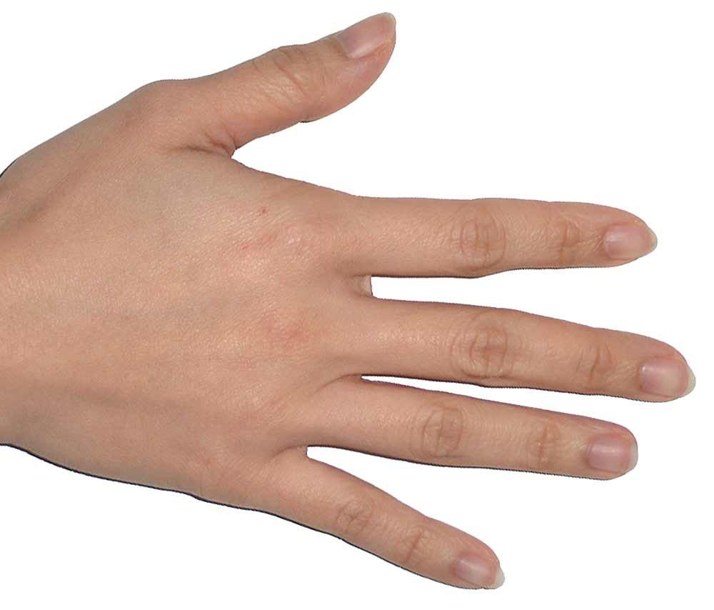hight resolution of hair nail diagram skin