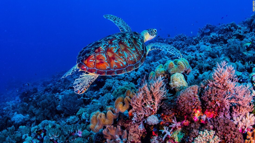 Reed Bank Coral Reef