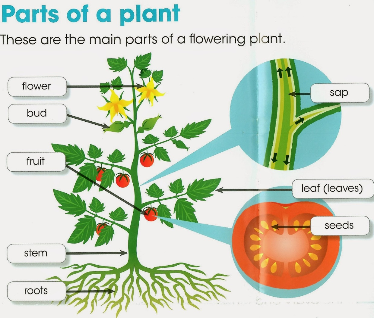 diagram of a flowering plant with label 1940 ford 9n wiring quotparts quot