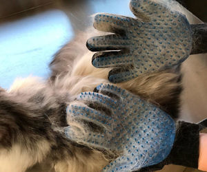 Pet Deshedding Brush Gloves
