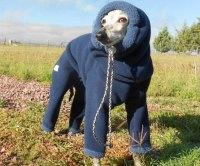 Dog Winter Suit