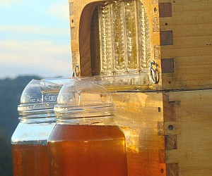 Automatic Honey Collecting Beehive
